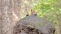 Leopard_rocks